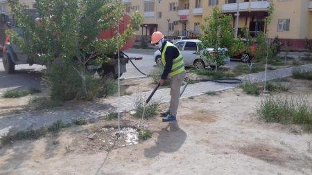 Не решен вопрос полива  деревьев внутри микрорайонов Актау
