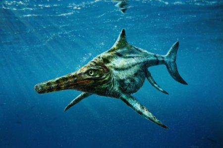 Ихтиозавр? Об удивительной находке рассказал мангистауский палеонтолог-любитель