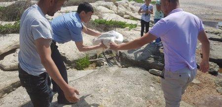 Остался на лето: Полицейские Актау спасли лебедя