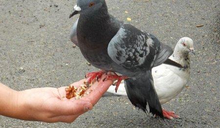 Маленькая да удаленькая: девочка отобрала хлеб у голубя