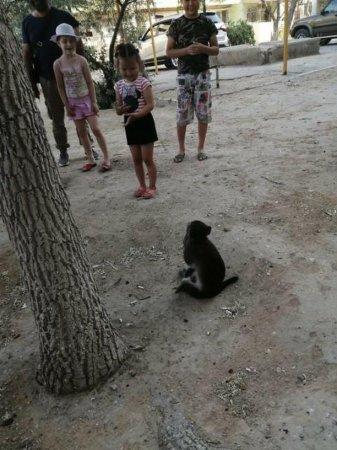 Чья обезьяна бегает в 6 микрорайоне ВИДЕО