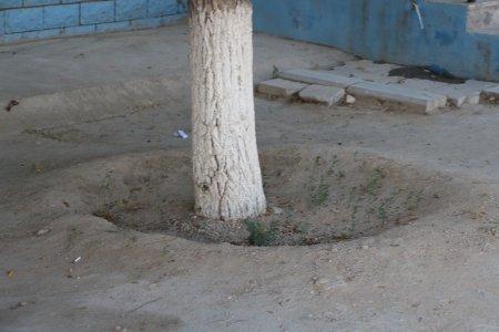 Полив по факту: Исполнение графика полива в Актау 11 июня