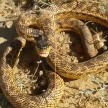 Вопрос знатокам: Что за змея? ВИДЕО