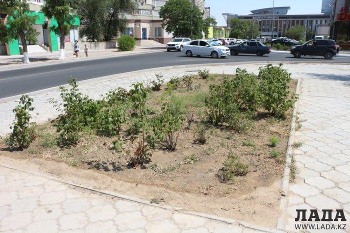 Фоторепортаж: Состояние зеленых насаждений в сквере имени Захарова в Актау