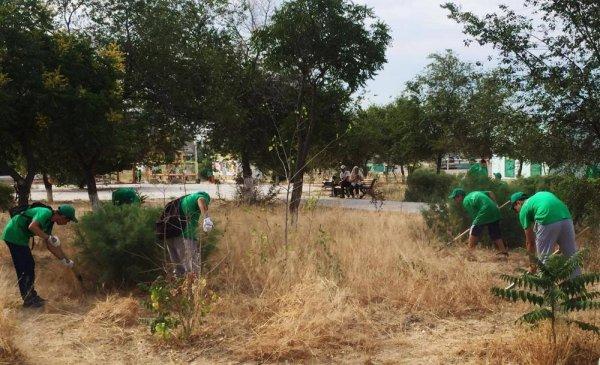 Экстренные меры: Спасать Актау от сухостоя начали 300 подростков и студентов