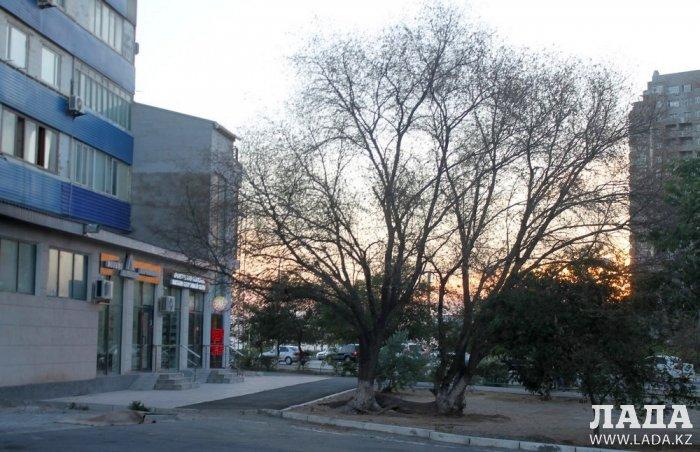 Жительница Актау возмутилась спиливанием живых деревьев