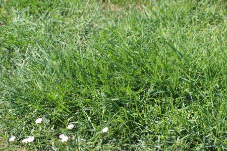 Ура! У Вечного огня зазеленела трава