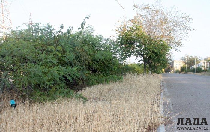Издевательский полив: Состояние зеленых насаждений по периметру ботанического сада Актау. Фоторепортаж