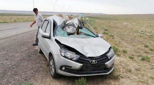 При столкновении автомобиля с верблюдом в Мангистау пострадали три человека