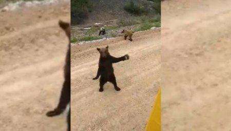 """""""Жуть гонишь?"""": кунг-фу-медведь продемонстрировал приемы рабочему на Сахалине"""