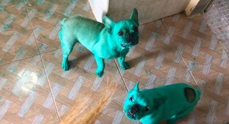 Два белых пса нашли зелёный пищевой краситель, и теперь их не узнать. Видели Халка? Для них он в зеркале
