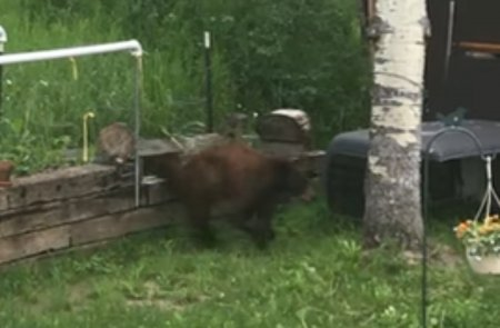 Медведь похитил кормушку для птиц, проделав акробатический трюк