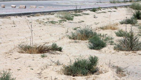 В степи живем: Как выглядит аллея в честь 25-летия «Казпочты» в Актау