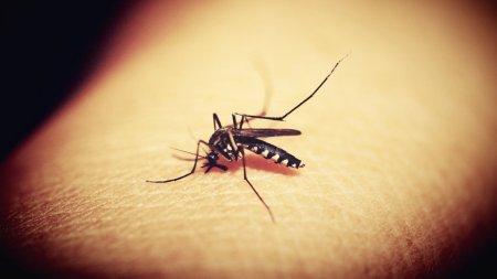 Названа любимая группа крови комаров