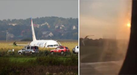 Аварийная посадка в поле: момент попадания птиц в двигатель самолета