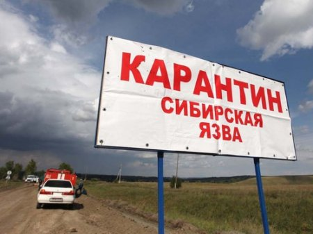 Пятеро в больнице, объявлен карантин: сибирская язва обнаружена близ столицы