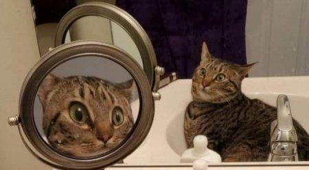 Удивленный собственным видом кот прославился в Сети