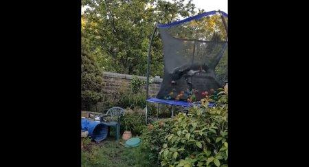 """Хозяева купили большой батут, и собаке от него """"снесло крышу"""" – бесподобное видео"""