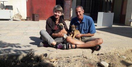 Иностранные туристы просят мангистаусцев помочь бездомным щенятам