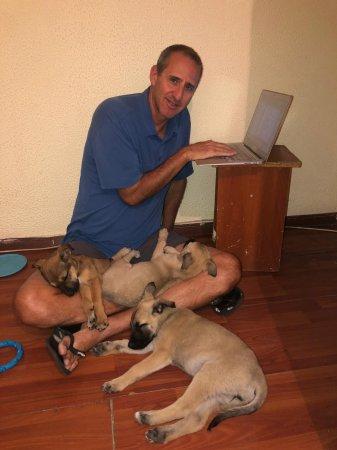Туризм-альтруизм: Найденных в Мангистау бездомных щенков планируют увезти в Америку