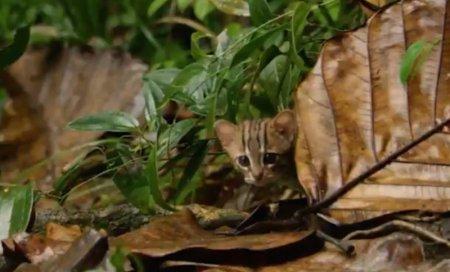 Самого маленького кота в мире удалось снять на видео