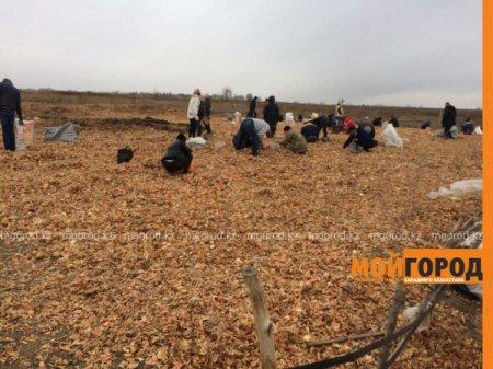 Мешками вывозят высыпанный в степи лук жители ЗКО