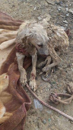 Резали ножом и издевались: Волонтеры Актау просят помощи для бездомной собаки