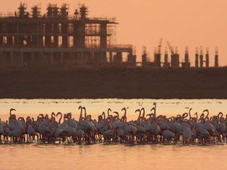 Фламинго прилетели в Актау