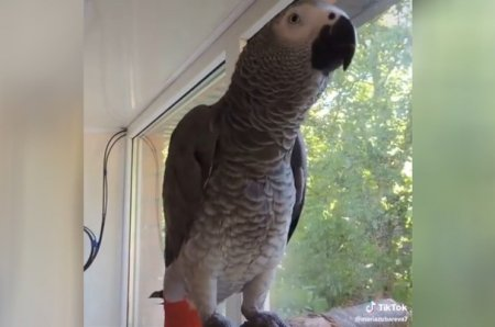 Попугай отвечает на вопросы о животных так, что ему впору воспитывать детей