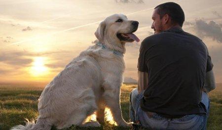 Ученые нашли у собак ген доброжелательности