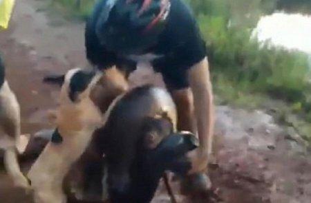 Мужчина 20 минут сражался с четырех метровой змеей, чтобы спасти свою собаку от смерти
