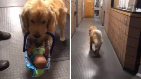 Полицейский пес в США попался на воровстве игрушек