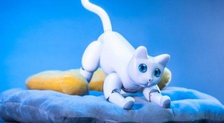 Эмоционального робота-кошку изобрели в Китае