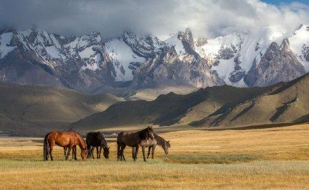Казахстан признан одной из лучших стран для приключенческого туризма