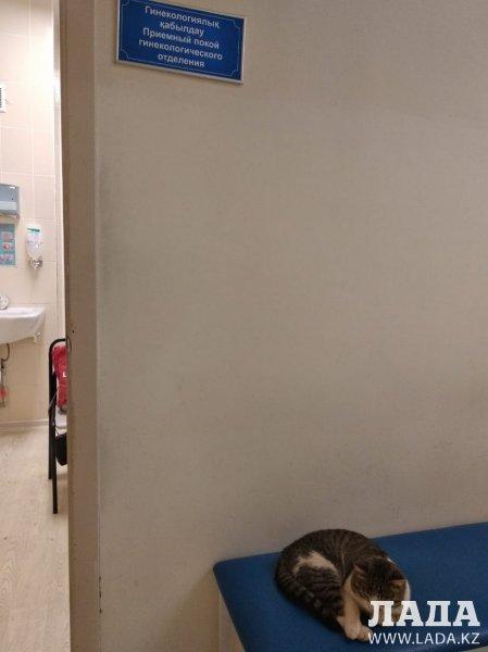 Кот в перинатальном центре Актау возмутил пациентку