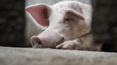 Из-за свиньи на трассе под Волгоградом погиб казахстанец