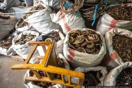 Ученые назвали змей первоисточником нового коронавируса из Китая