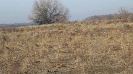Суслики предсказали раннюю весну в Казахстане