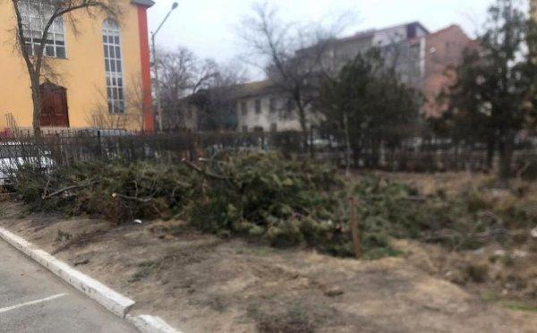 Житель Актау возмутился вырубкой деревьев на территории суда в Актау