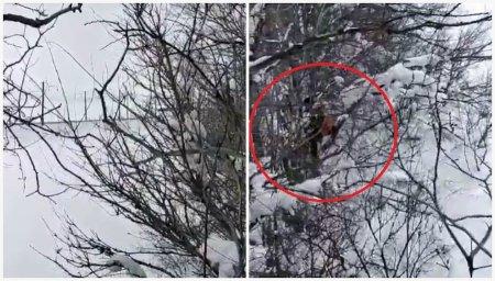 """""""Ноги дрожат, от волков убежали"""": видео с мужчинами на деревьях обсуждают в Казнете"""