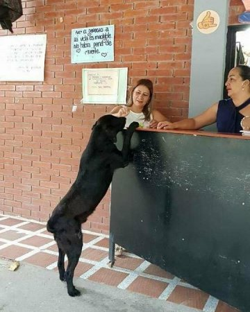 Собака заметила, что люди платят за еду. Она повторила за ними, но вместо денег принесла листья