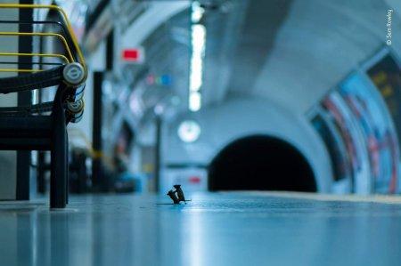 Мыши дерутся на станции метро. Фотография