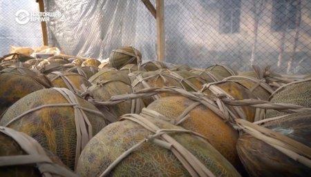 Узбекистан: хранение дынь и винограда на зиму