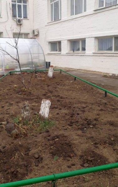 Вырубку деревьев в школе Актау прокомментировали в администрации учебного заведения