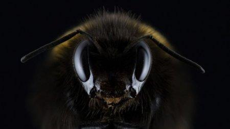 Обнаружен вирус, превращающий пчел в зомби