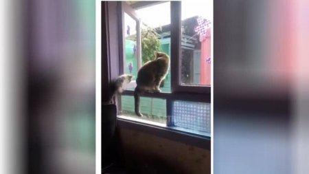 Мать года: кошка отправила надоевшего ей котёнка «полетать» из окна