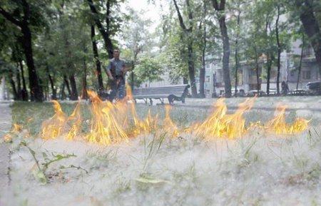 Тополиный пух стал причиной пожаров в Павлодарской области