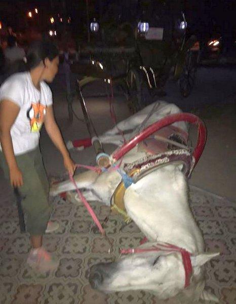 Лошадь упала в обморок в Актау - очевидец