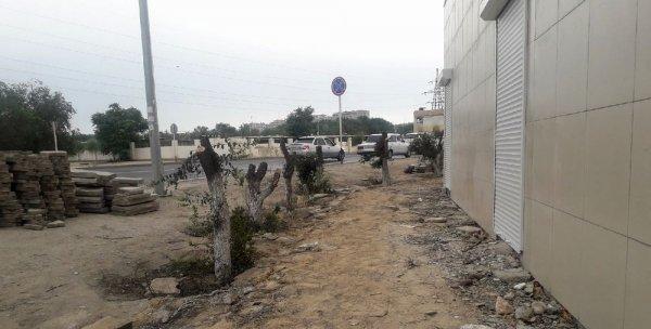 Деревья возле рынка в Актау полностью выкорчевали