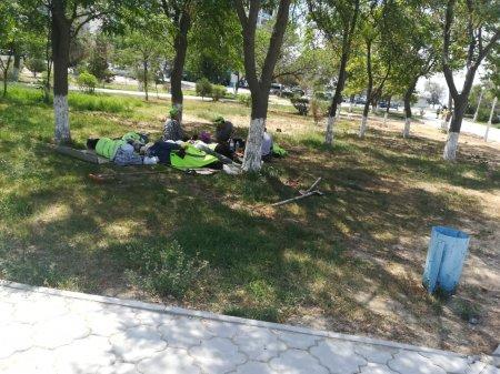 Молитва об акиме или почему в Актау не смогли организовать полив дереьев во всех микрорайонах